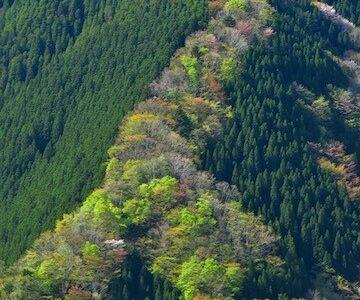奈良県 ナメゴ谷 その景色は登り龍に例えられる