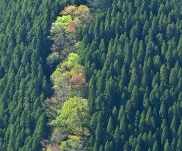 奈良県 ナメゴ谷の風景 少し桜あり