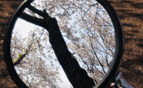 ミラーに移る桜 Nikon D7200