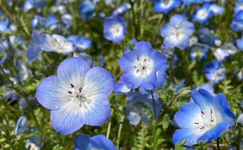 明石海峡公園 太陽のもと元気に咲く花たち