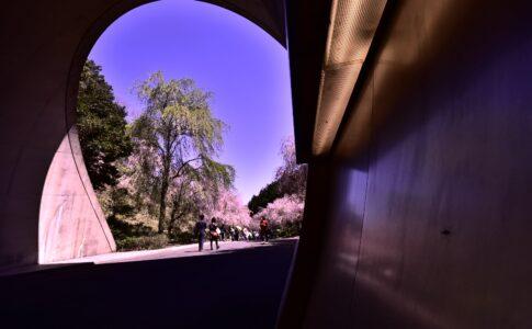 トンネルの向こうに見えるもの