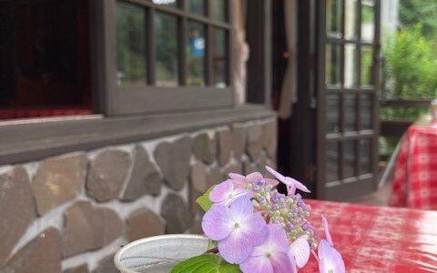 卓上の紫陽花